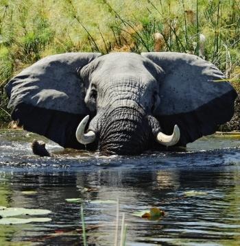 Account based marketing - The Elephant